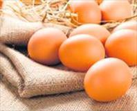 Alzheimer'a yumurta
