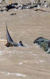 İkisi de suların vahşi canavarları