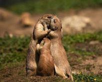 Hayvanlar aleminin sevgi dolu kareleri