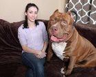 O dünyanın en büyük köpeği