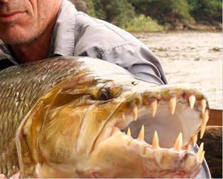 Nehrin vahşi canavaları