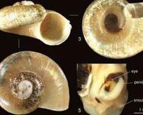 Çanakkale'de yeni bir canlı türü bulundu