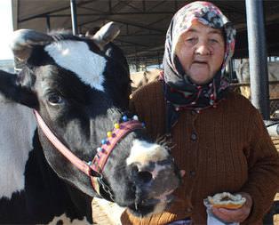 Hiç ineği yok ama yüzlerce litre süt satıyor