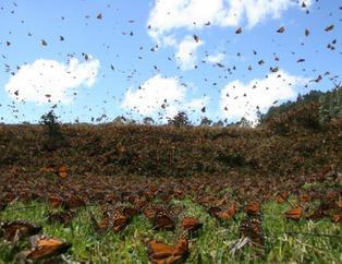 10 bin kelebeğin göç hikayesi