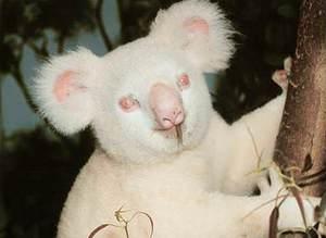 Albino hayvanlar