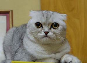 Dünyan�n en üzgün kedisi