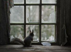 Pencere arkas�nda yaln�z kalan hayvanlar
