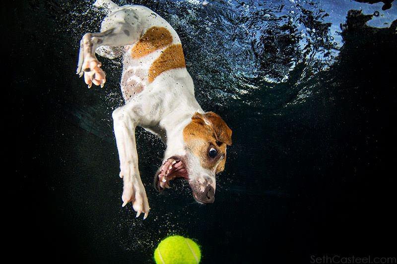 Su alt�ndaki köpekler