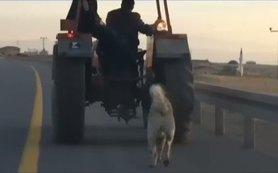 Köpe�ini traktörün arkas�na ba�layarak götürdü