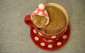 Çay barda��n� mesken edinen sevimli kedi