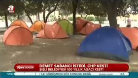 CHP'li belediye 100 yıllık çınar ağacını kesti