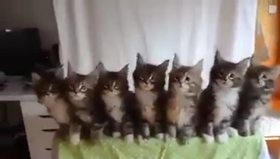 Kedilerden  muhteşem koreografi