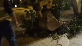 İzmir'de onlarca ağac kestiler