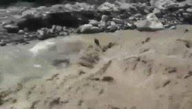 Polis nehirden köpek kurtardı