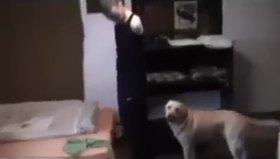 Engelli sahibini giydiren köpek