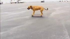 Kay kay yapan köpek