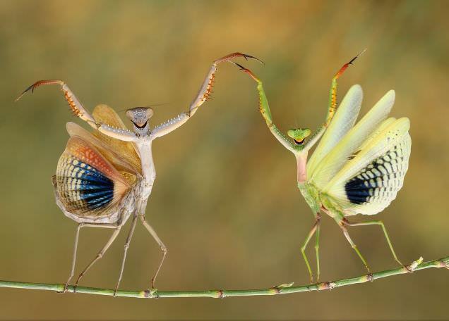 2014 National Geographic Foto�raf Yar��mas�'ndan en iyi foto�raflar