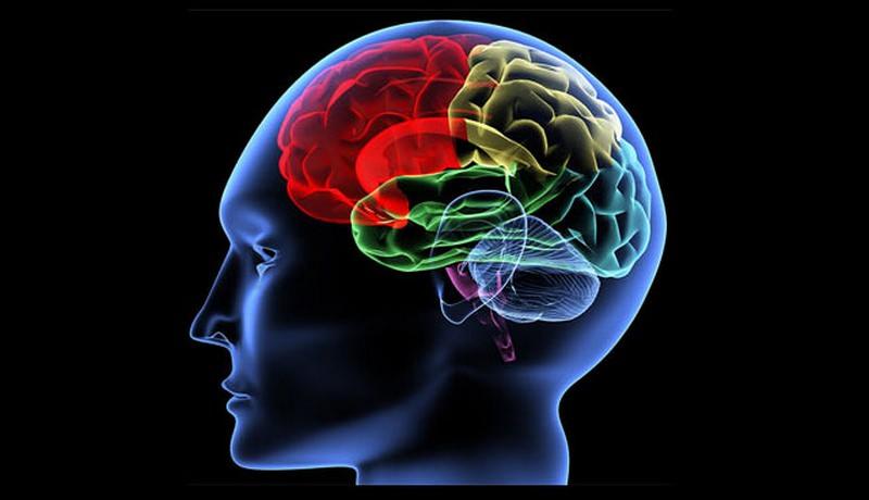 Beyin ya��n�z� hesaplamak ister misiniz?