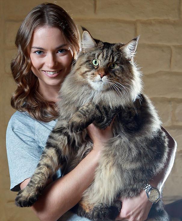 Bu kediler Photoshop de�il ger�ek