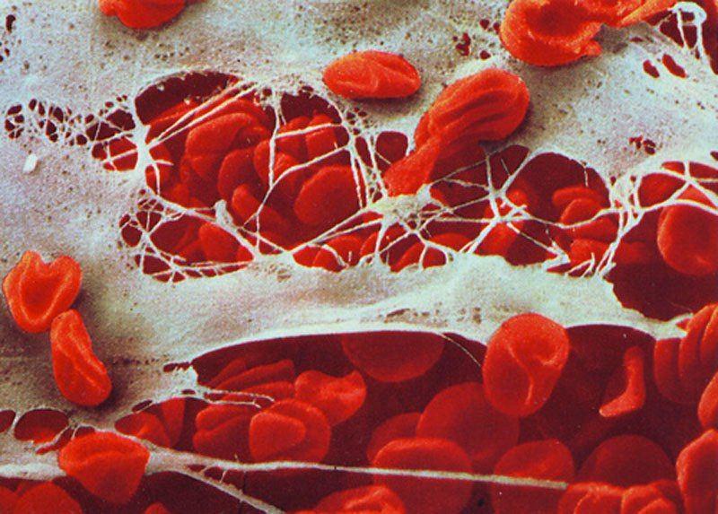 �nan�lmaz ba����kl�k sistemimizin etkileyici foto�raflar�