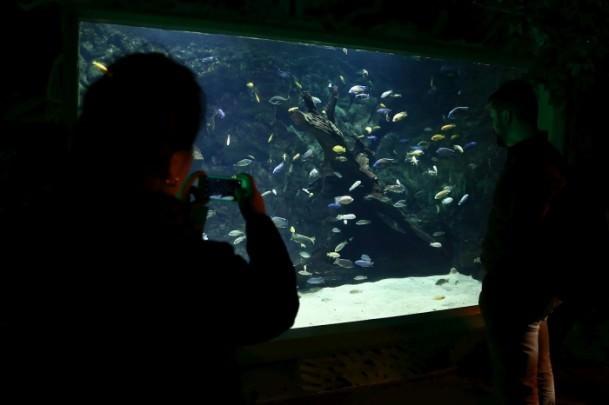 �stanbul Sea Life Akvaryumu'nun a��l��� ger�ekle�ti