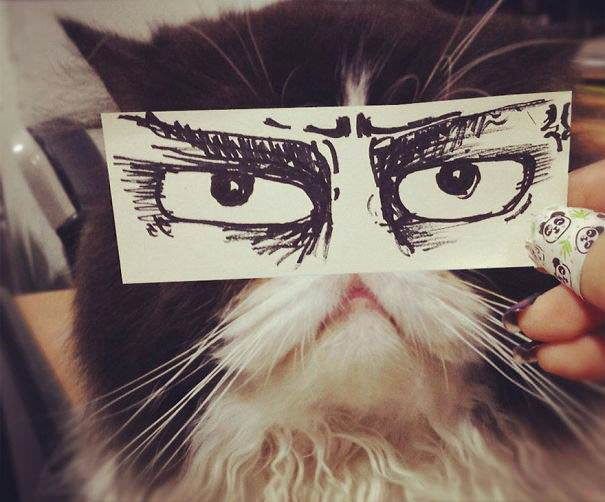Anime g�zl� kedileri g�rd�n�z m�?