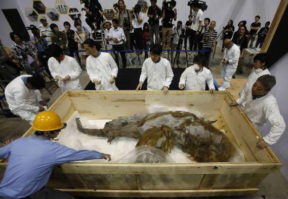 39 bin y�ll�k mamut Japonya'da sergide