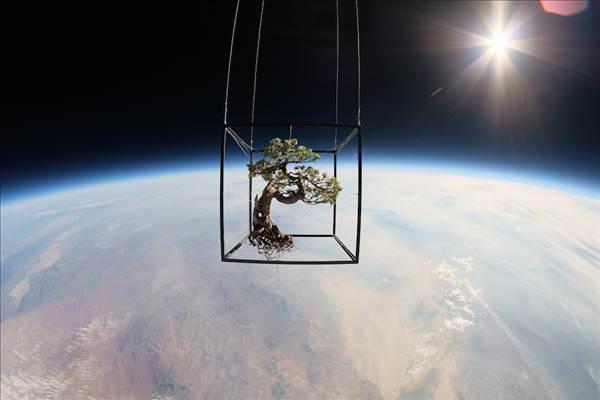 50 ya��ndaki bonzai a�ac�n� uzaya yollad�lar