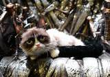 Grumpy Cat, Game of Thrones taht�nda