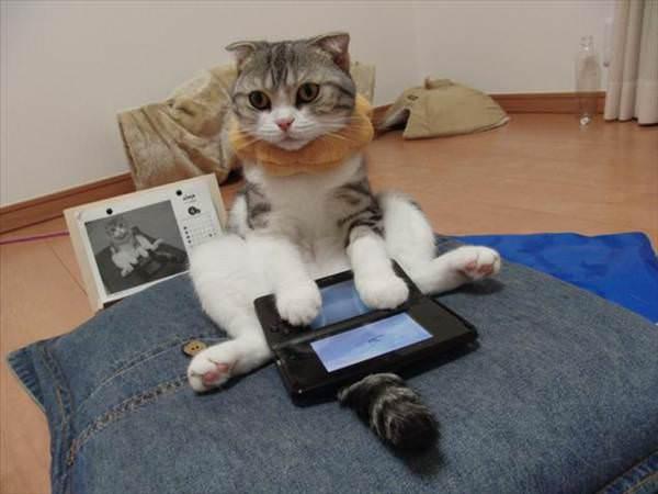 Kediler video oyunu oynarken nas�l g�r�n�yor?