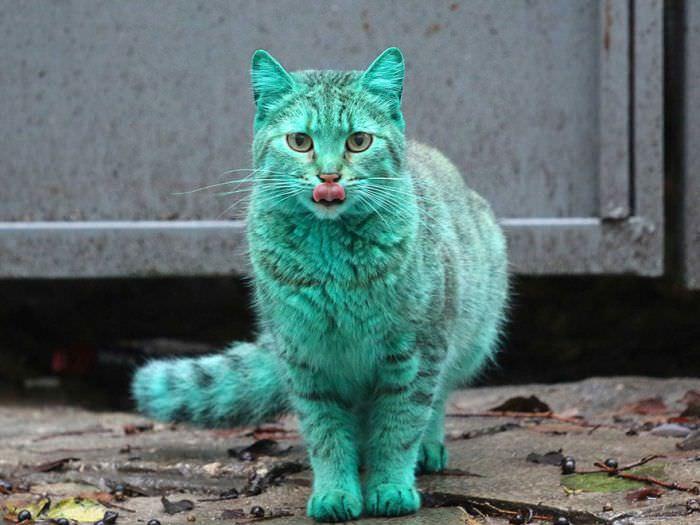 Bulgaristan'daki 'ye�il kedi'nin s�rr� ��z�ld�
