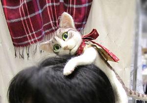 Kafas�nda kedi isteyen var m�?