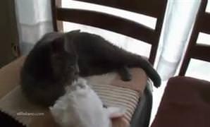 Kim demi� kediler bere takmaz diye?