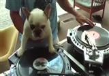 DJ k�pek, internetin yeni fenomeni oldu