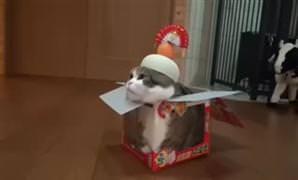 Oyuncak rol� yapan kedi