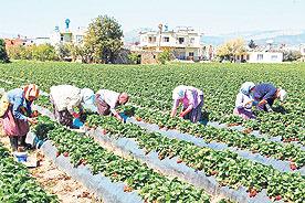 Uygun olan sektörlerin gıda ürünleri ve içecek hayvancılık