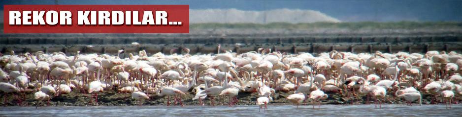 Flamingolar üreme rekoru kırdı